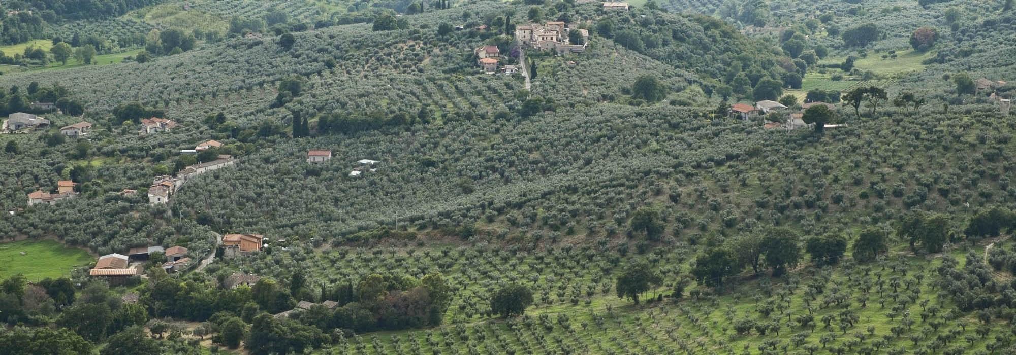 Olio Extravergine d'Oliva – Das Gold Italiens